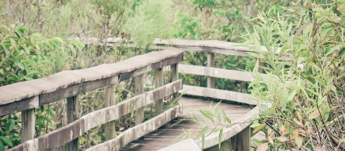 01-Everglades